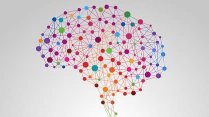 How Play Wires Kids Brains For Social >> Brain Development Zero To Three